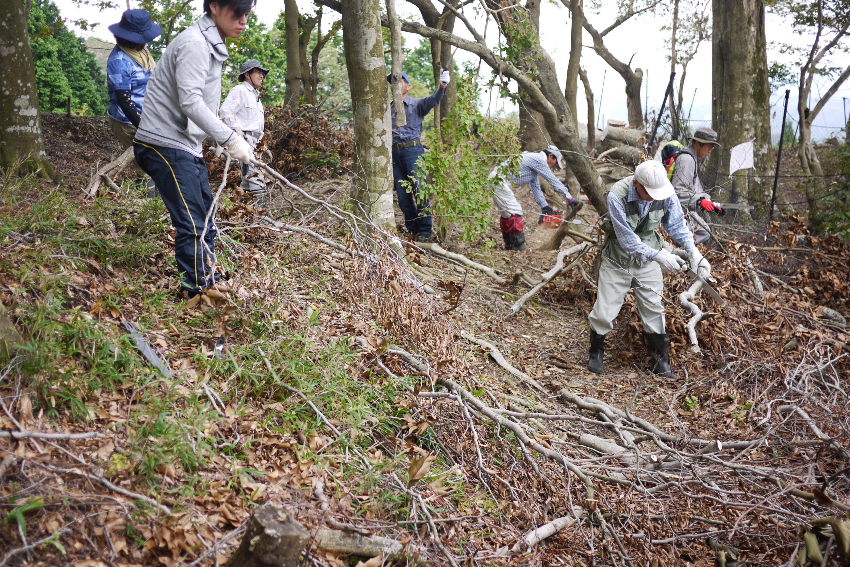 9月ブナ林保護活動