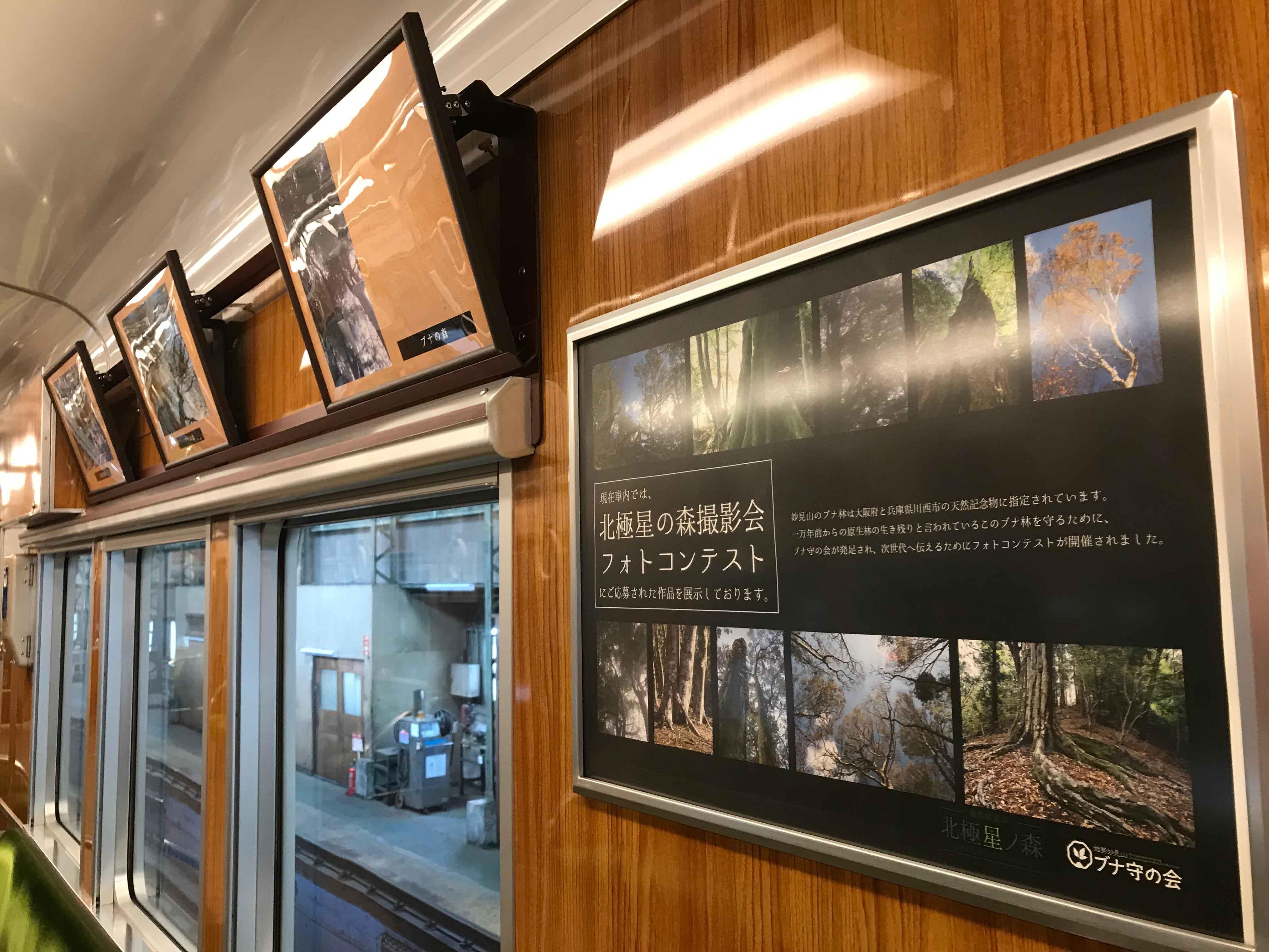 能勢電鉄車内にブナ林の写真を掲示いただいております!(フォトコンテスト2018参加作品)